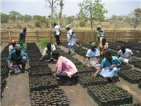 Management of village nursery Malawi