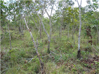Natural Regeneration-Kasungu, Malawi