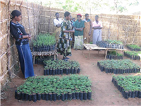Nursery-womens tree planting club