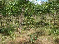 Village forest area under management