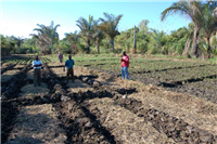 CA with mulch for maize after rice
