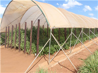 Greenhouse with irrigated produce for sale