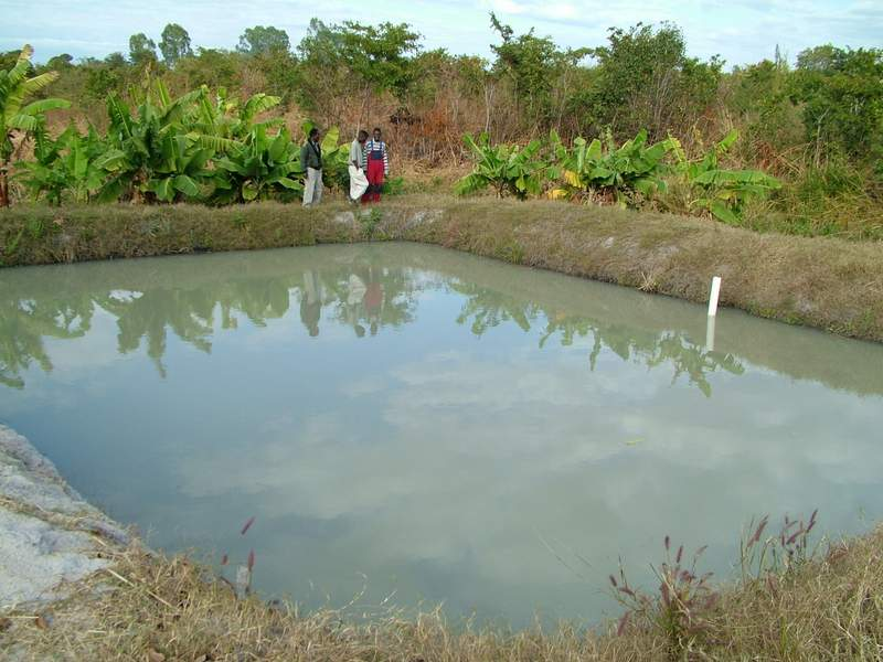 Pond Fish Types Fish Pond