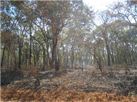 Clearing & burning for cultivation Mozambique