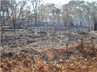 Clearing & burning land for cultivation Mozambique