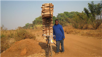 Firewoodcut from native forest for sale in Lilongwe